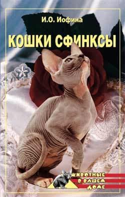 Дарья Нестерова «Кошки – сфинксы»